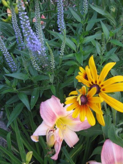 Garden_2012_1
