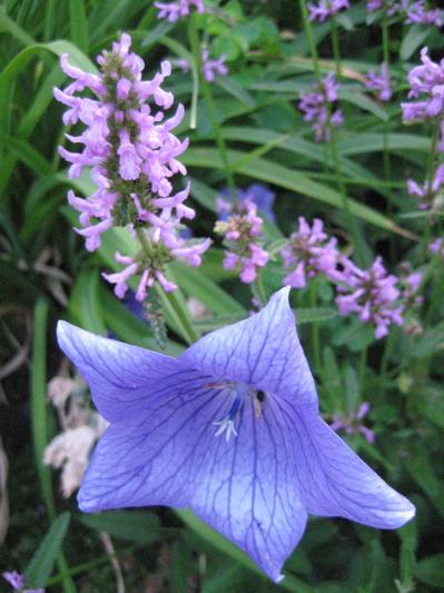 Garden_2012_2
