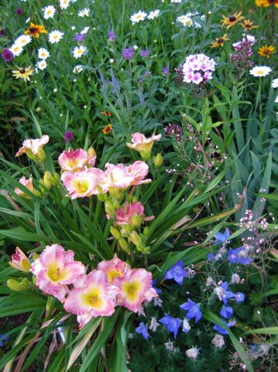 Garden_2012_4